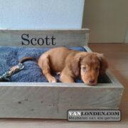 Steigerhouten hondenmand Bello (Steigerhouten dieren accessoires kopen)